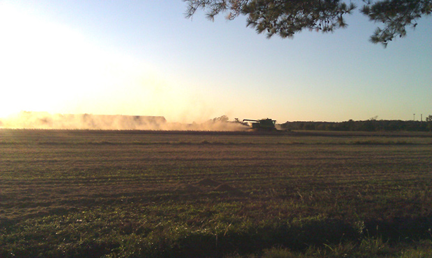 A combine harvesting soy beans in Virginia.