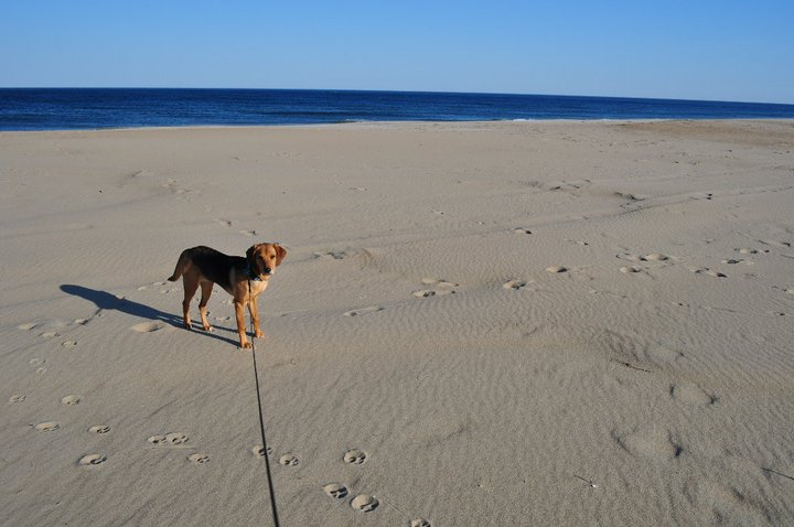 Ginger at the beach