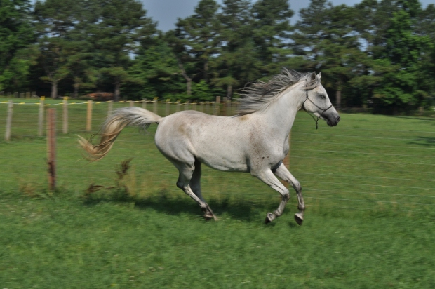 TC 10: Horses