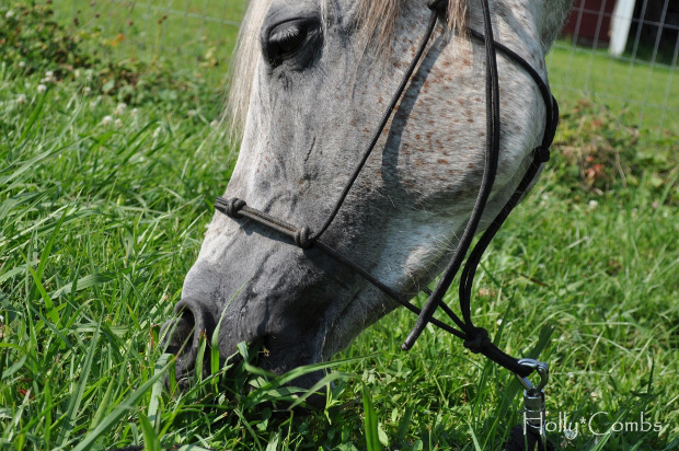 """What horses have taught me: """"I can do this"""""""
