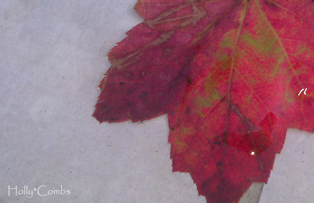 A fall leaf.