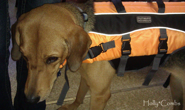 Ginger in her life vest.