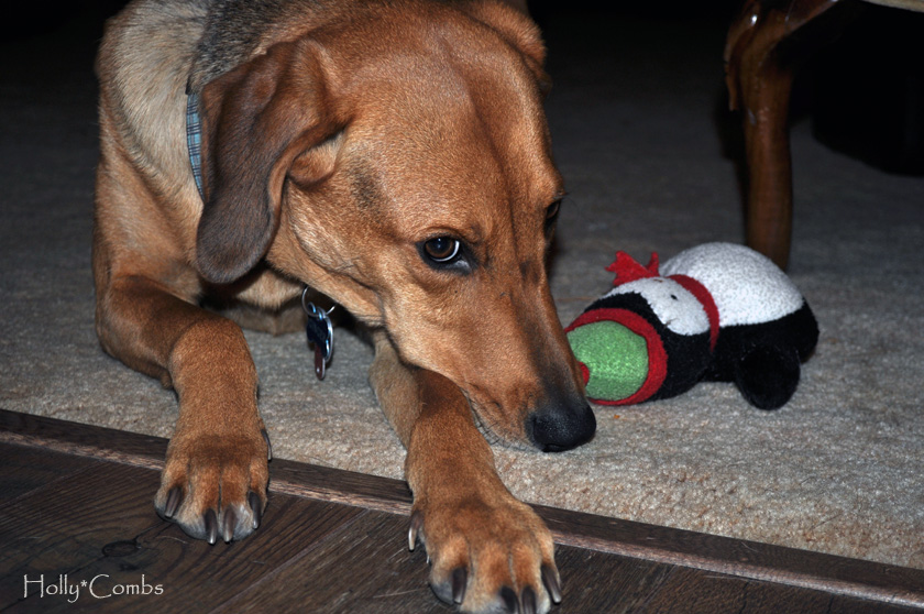Ginger with her Christmas penguin