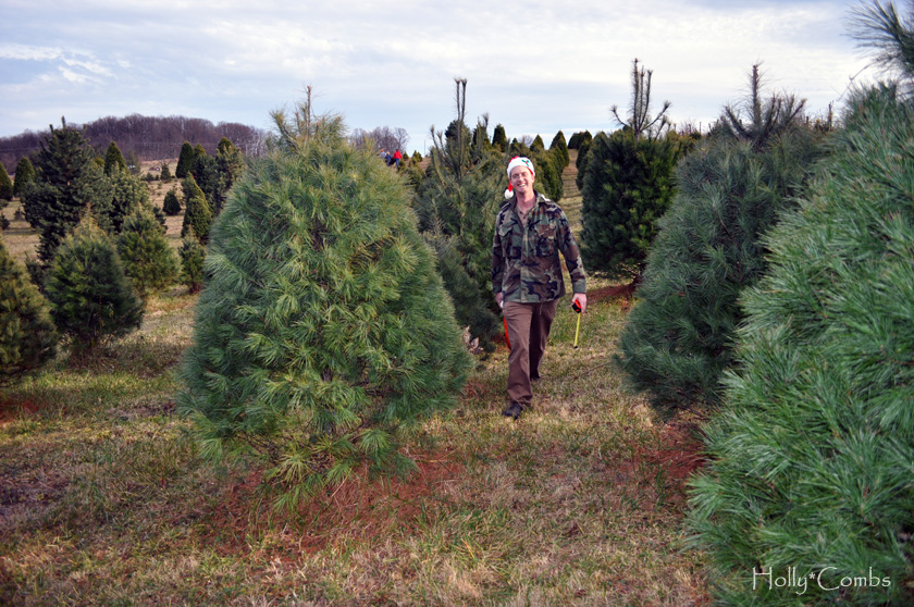 Searching for the perfect tree
