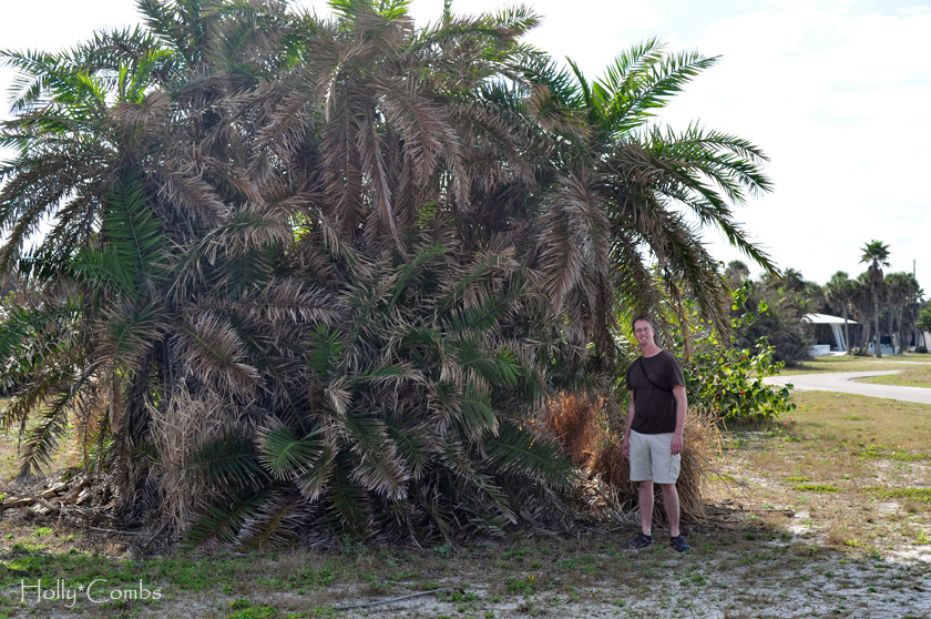 Husband loves palm trees.