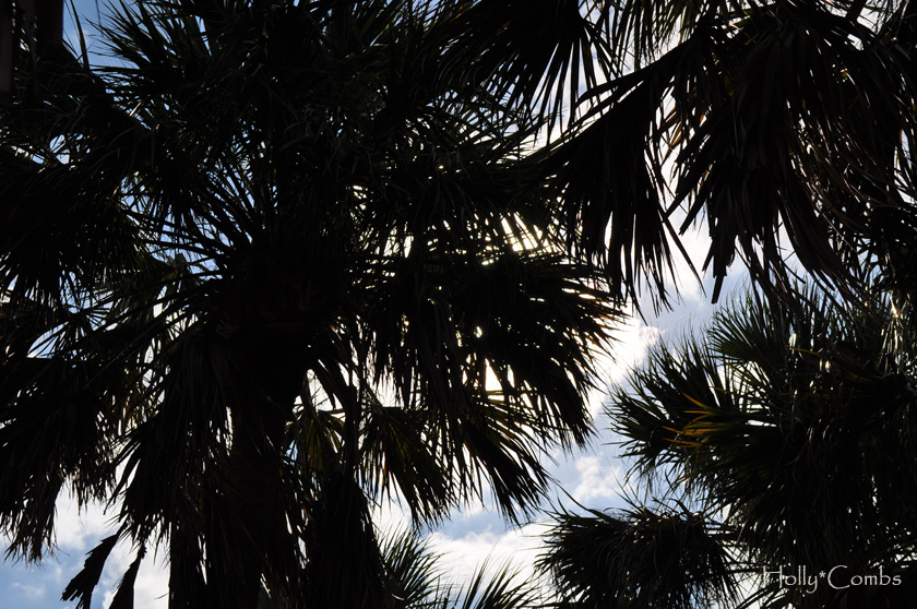 More palm trees.