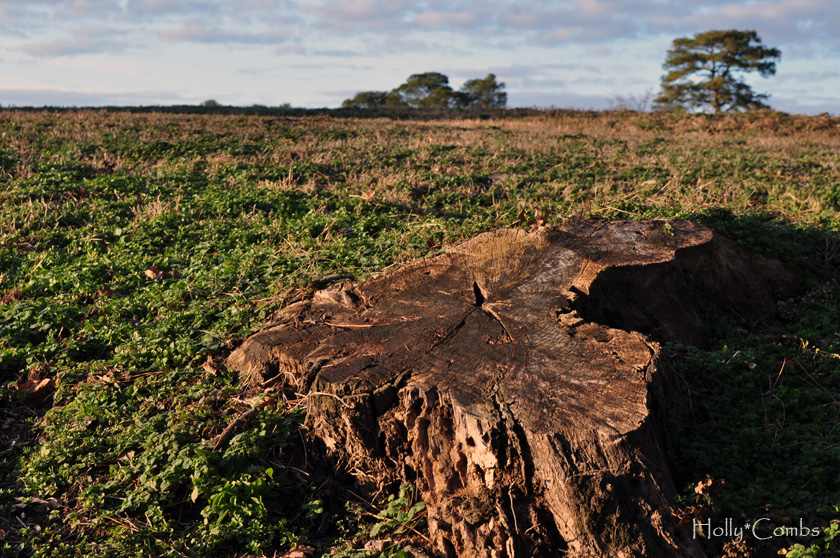 Old tree stump amid farmland