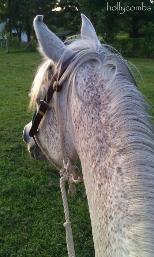 My horse, Chappy