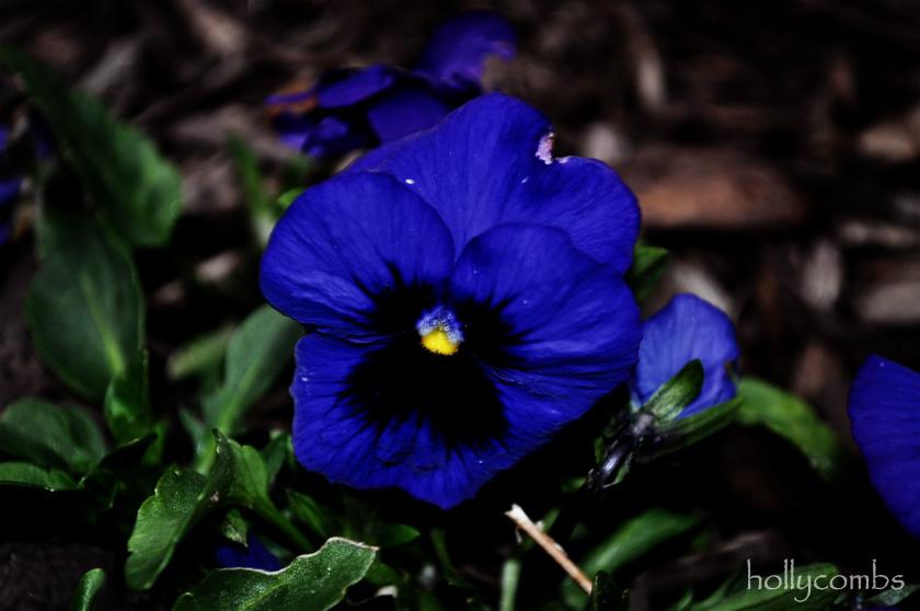 Vibrant flowers.