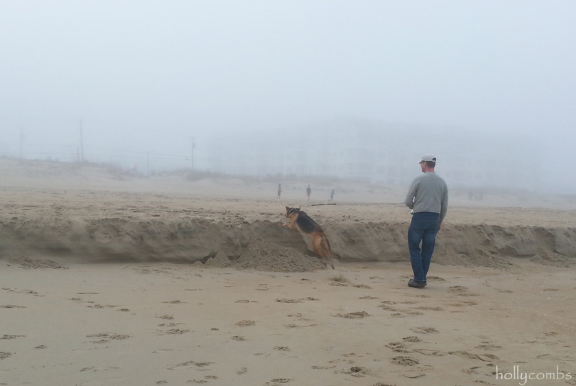 The pup in the fog