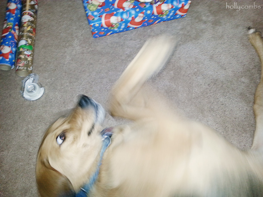 Ginger helping wrap gifts