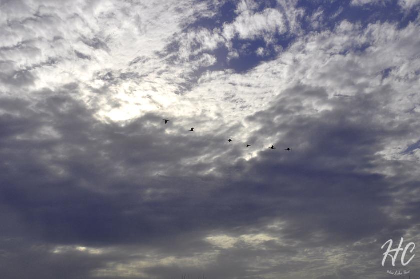Birds in OBX