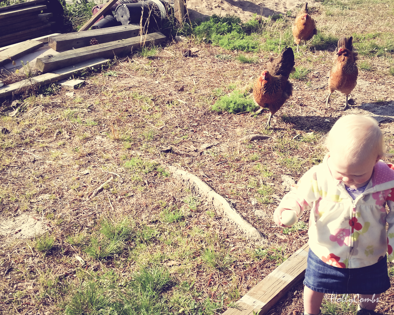 Fiona does chores, feeds chickens and collects eggs